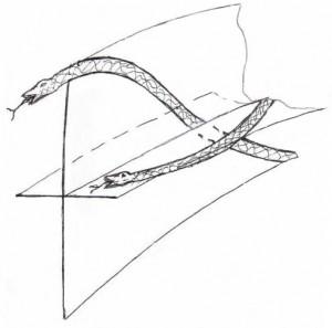 плоскости проявления змей