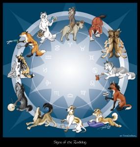 животный круг собак