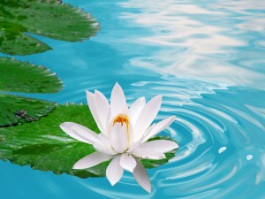 цветок жизни