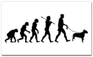 Путь эволюции