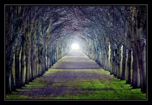 Путь совершенства