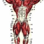 Регенерация тела