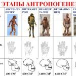 Процесс эволюции