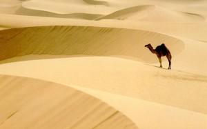 Сила пустыни и испытаний