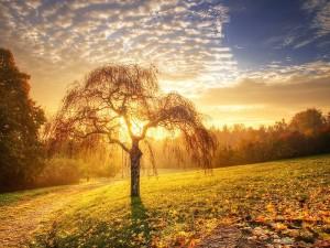 Древо миров